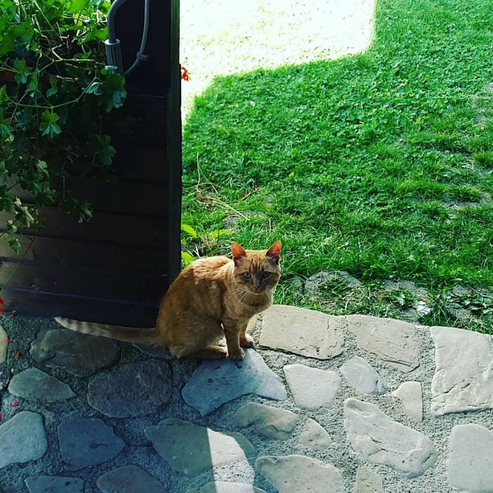 red cat at the gpec summer school 2017